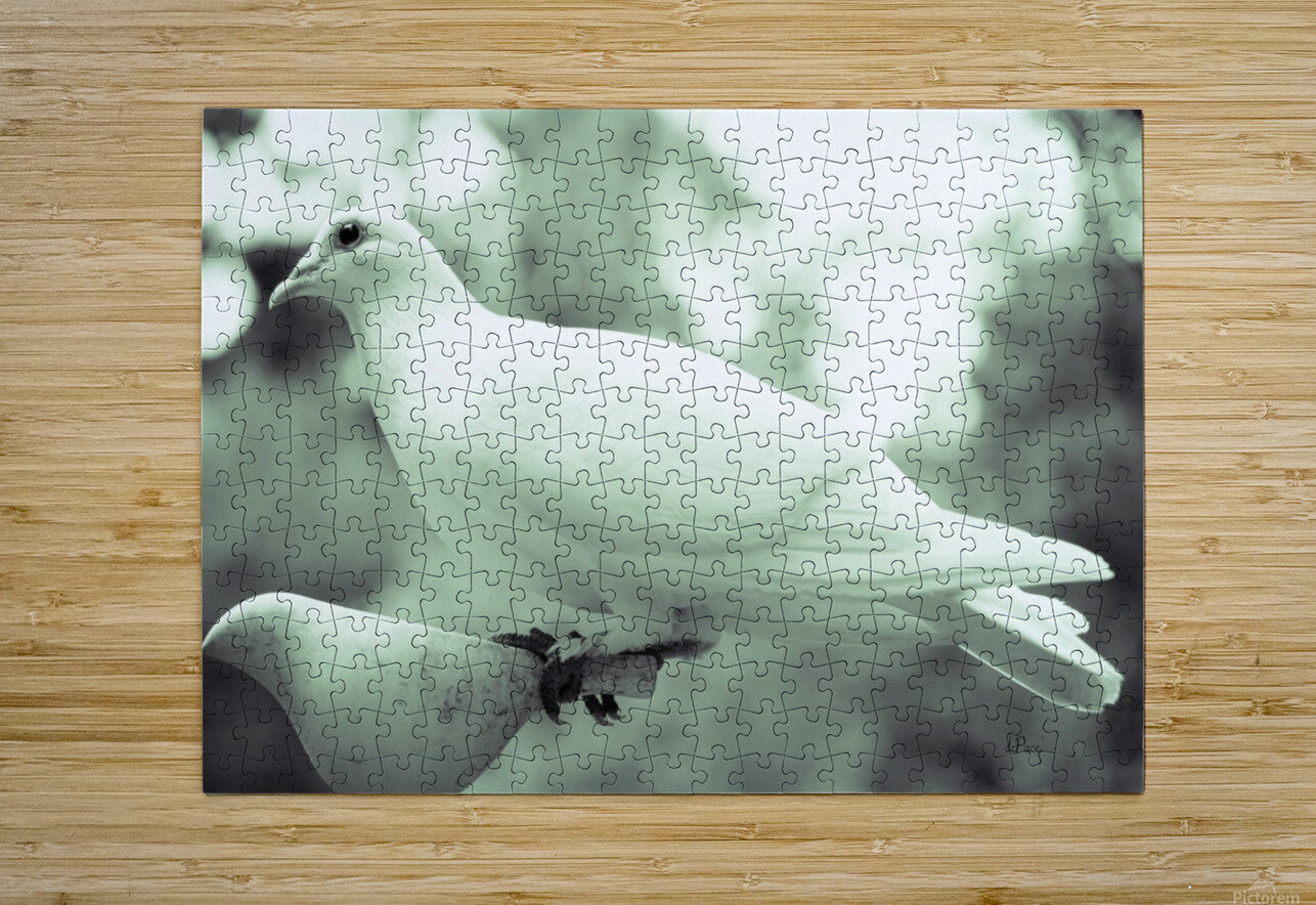 Dove enjoying a meal  HD Metal print with Floating Frame on Back