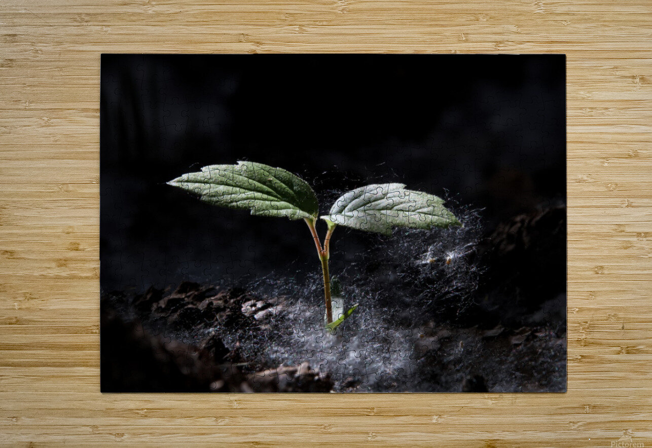 Young Sapling  HD Metal print with Floating Frame on Back