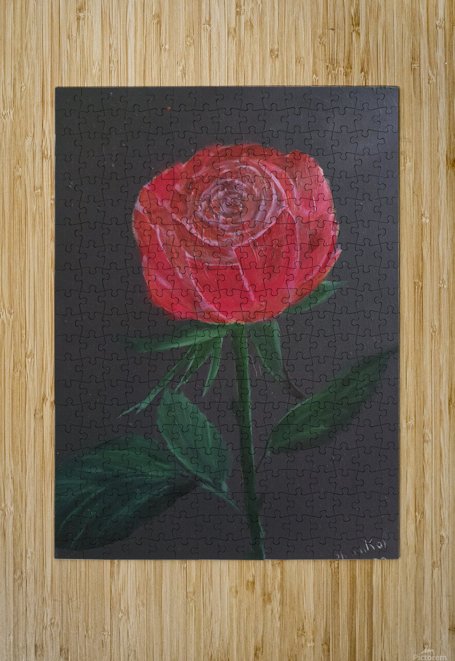 Single red rose  HD Metal print with Floating Frame on Back