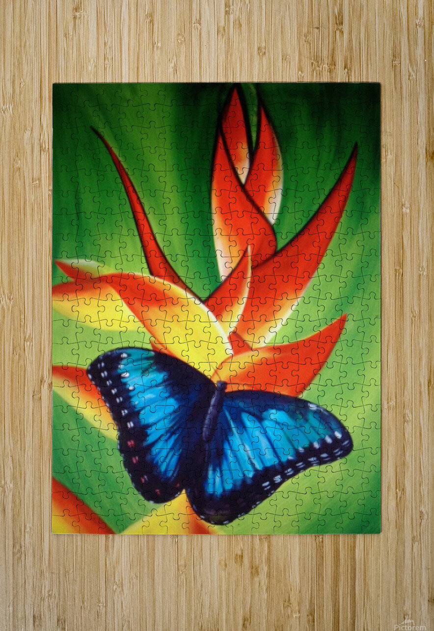 blue butterfly     HD Metal print with Floating Frame on Back