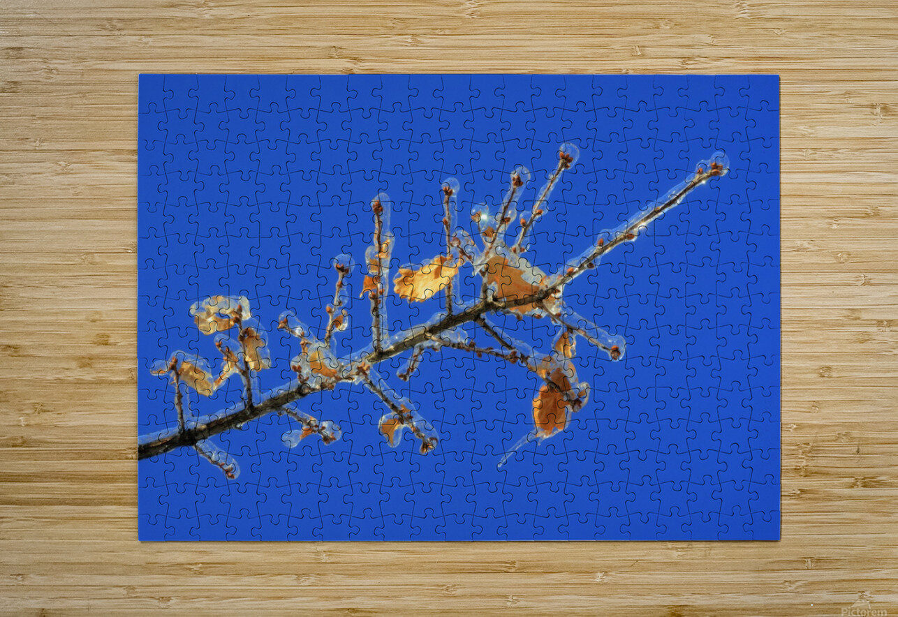 Sucreries glacees  HD Metal print with Floating Frame on Back
