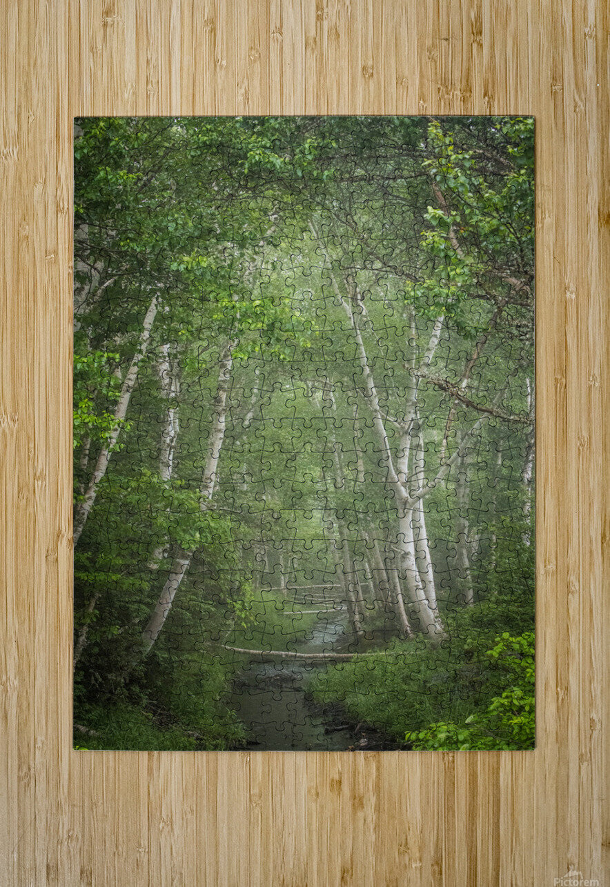 Enchanted  HD Metal print with Floating Frame on Back