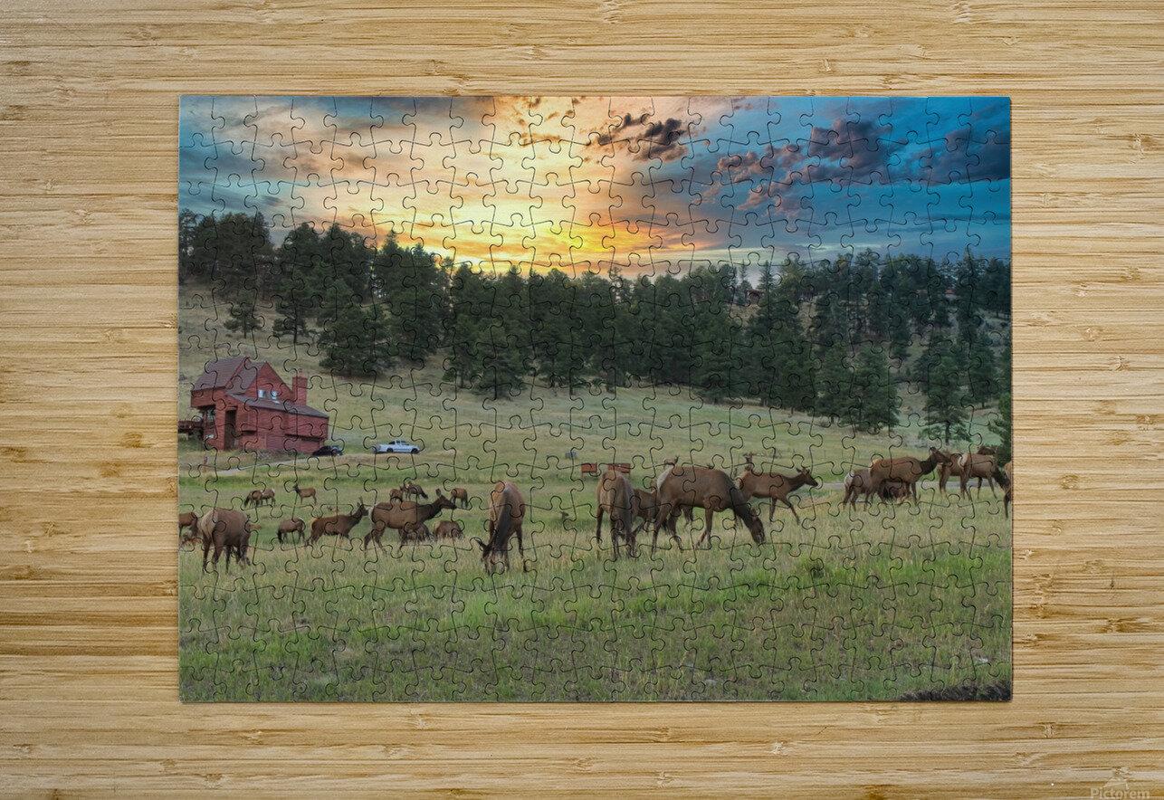 Colorado Elk  HD Metal print with Floating Frame on Back