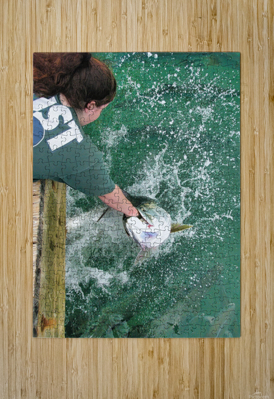 Tarpon Feeding  HD Metal print with Floating Frame on Back