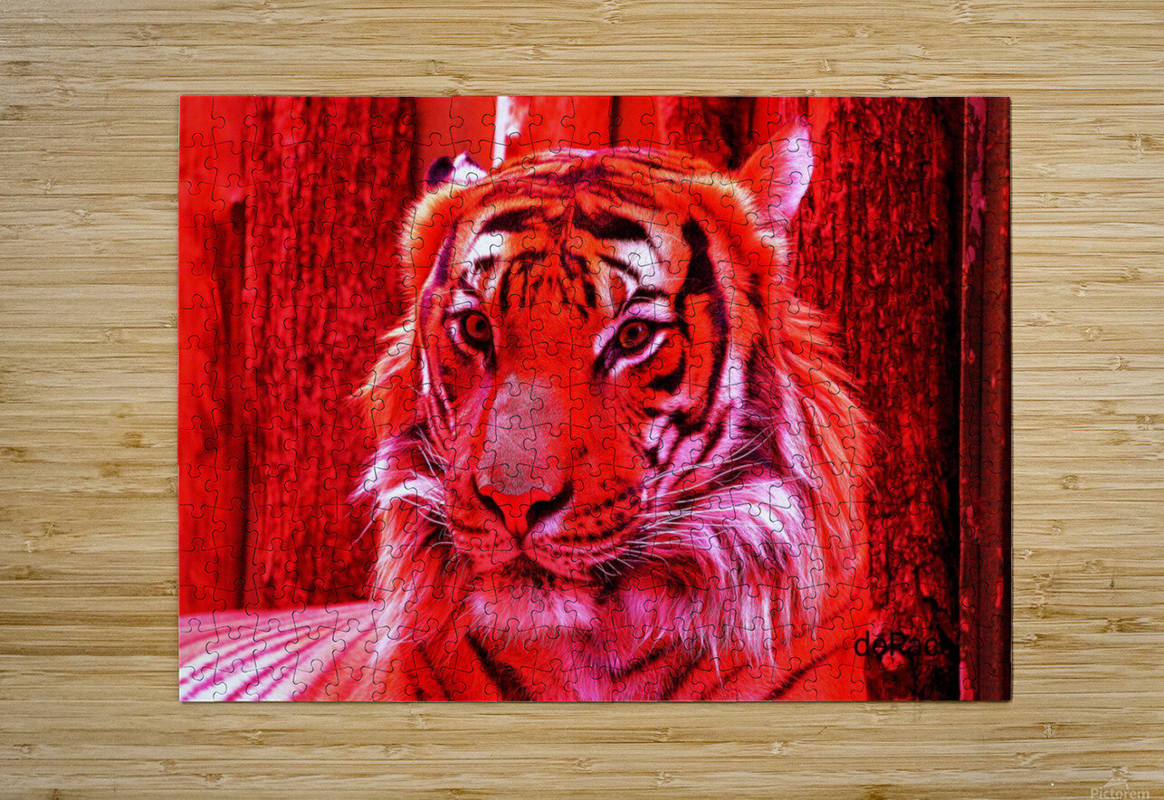 Rare Red Tiger  HD Metal print with Floating Frame on Back