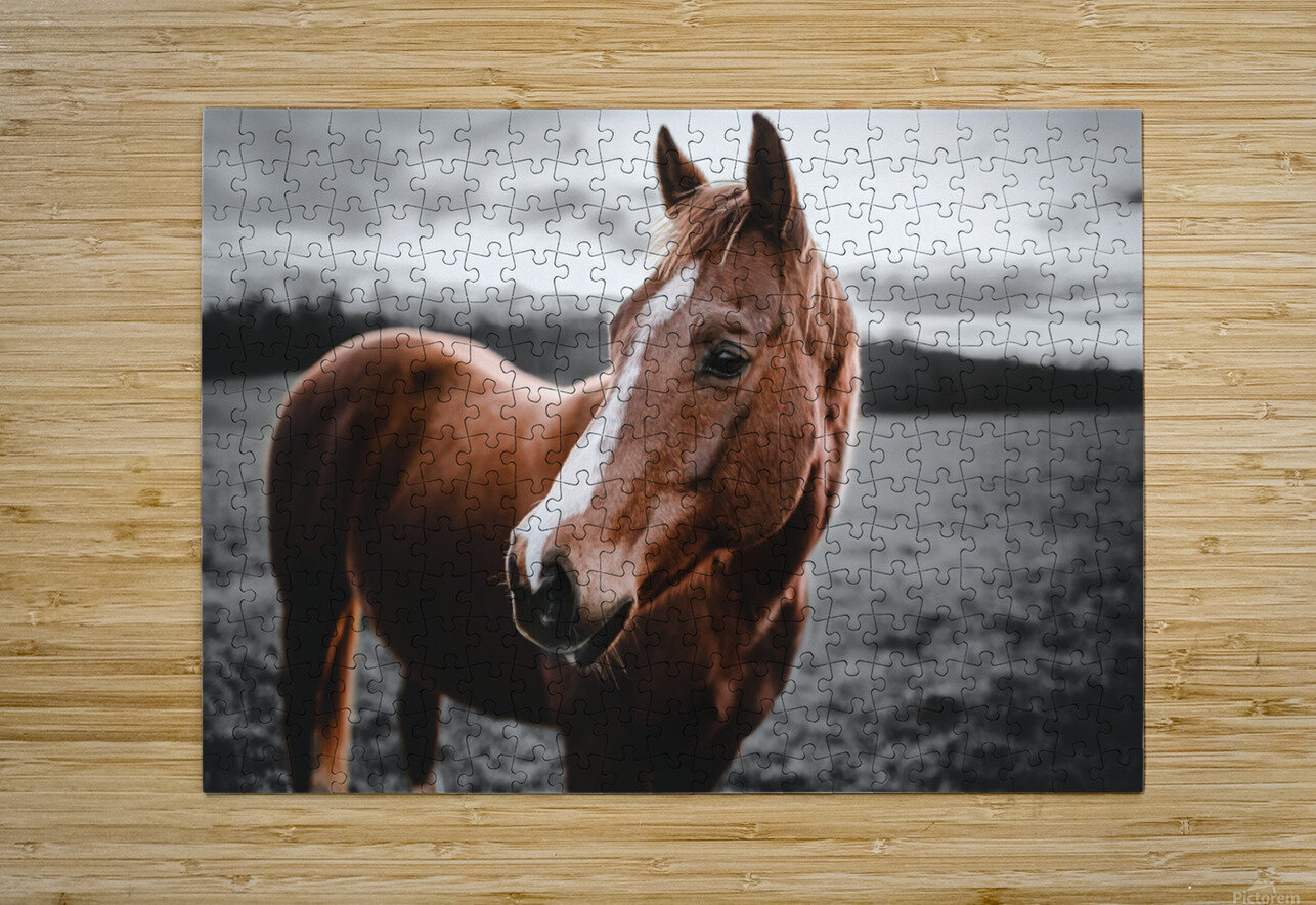 Shining Horse  HD Metal print with Floating Frame on Back