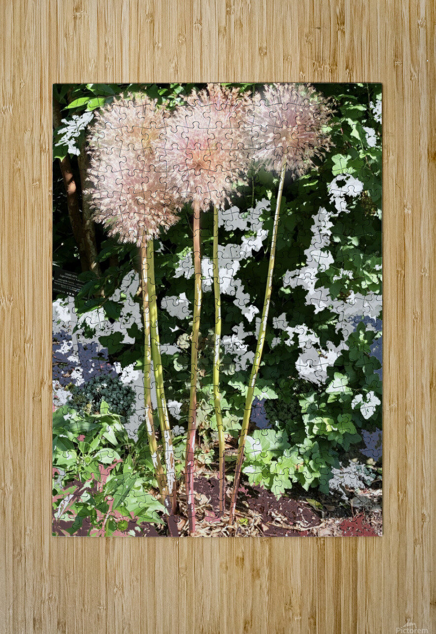 Alium Burst 200724  HD Metal print with Floating Frame on Back