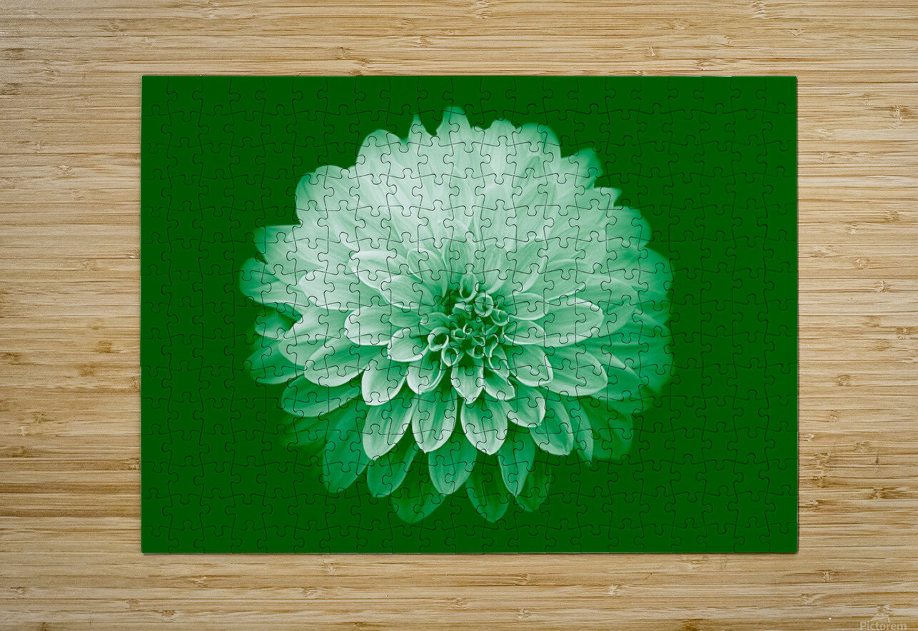 Dahlia on Green  HD Metal print with Floating Frame on Back