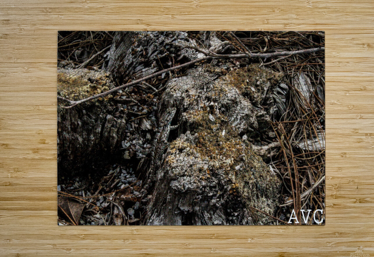 Camoflauge Creature  HD Metal print with Floating Frame on Back