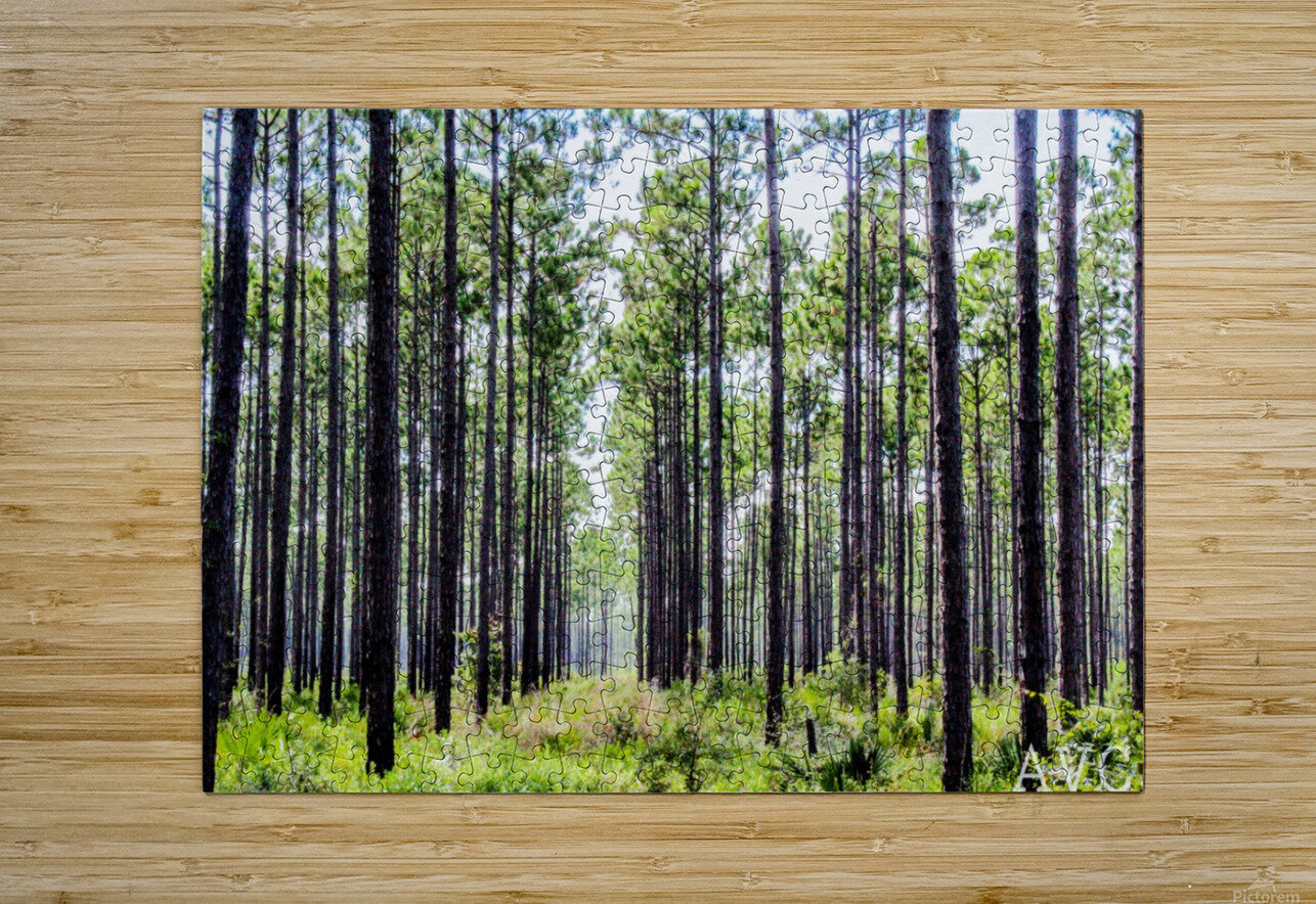 Forest Escape  HD Metal print with Floating Frame on Back
