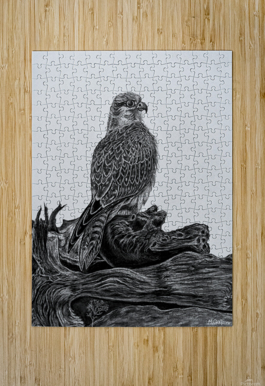 Gyrfalcon  HD Metal print with Floating Frame on Back