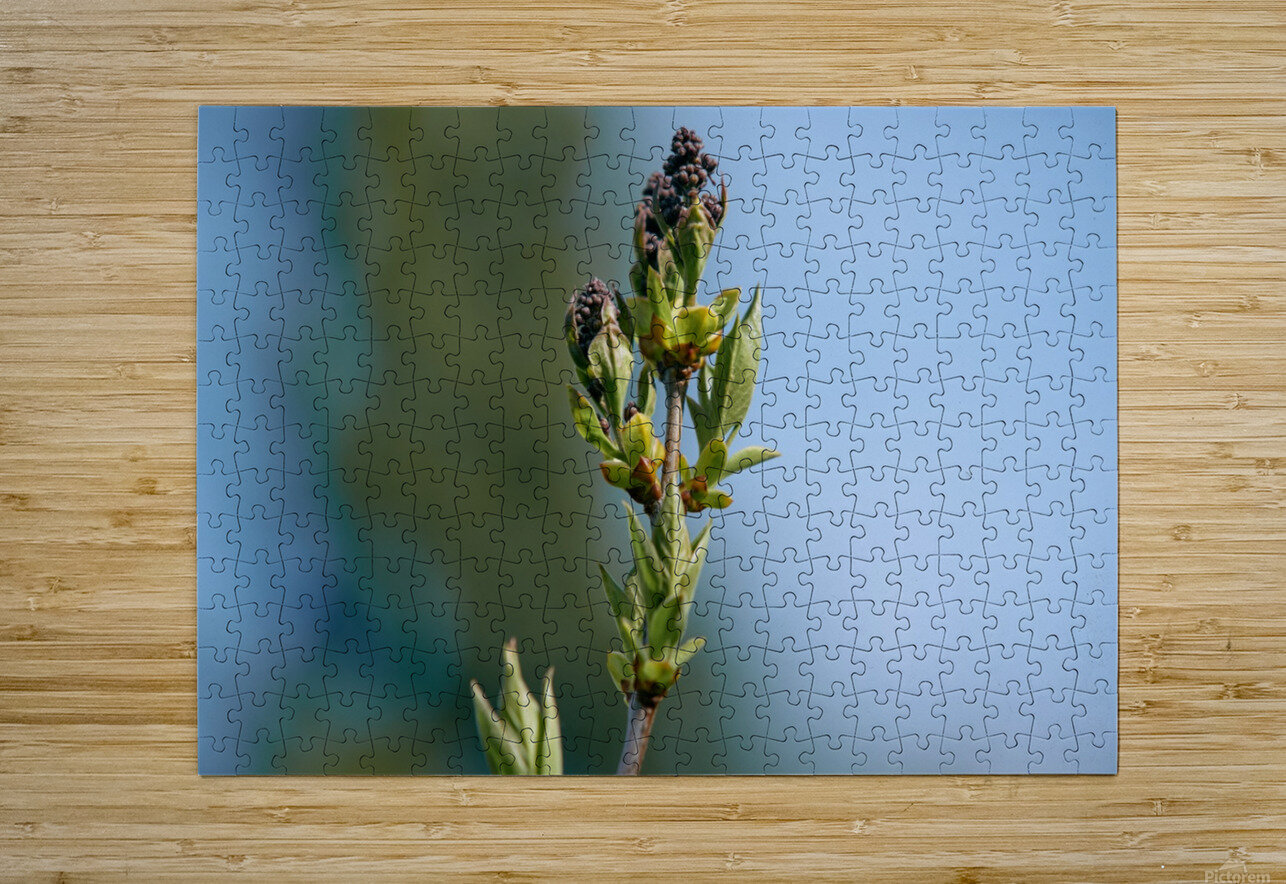 Wild Flowers 3  HD Metal print with Floating Frame on Back