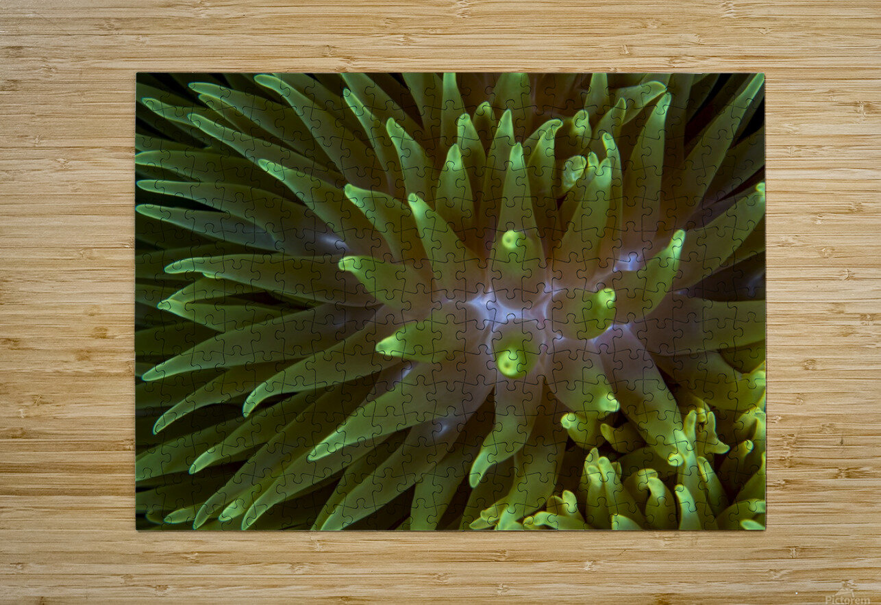 Sea Anemone 4  HD Metal print with Floating Frame on Back