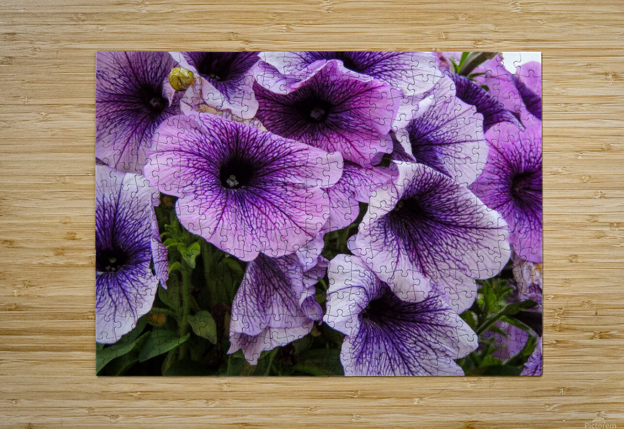 Purple Flower  HD Metal print with Floating Frame on Back