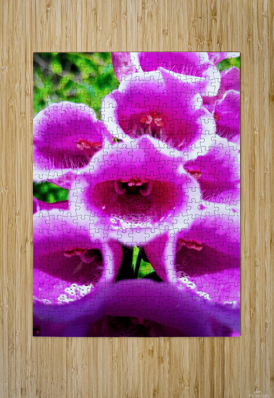 MOUTH OF THE DIGITALIS  HD Metal print with Floating Frame on Back