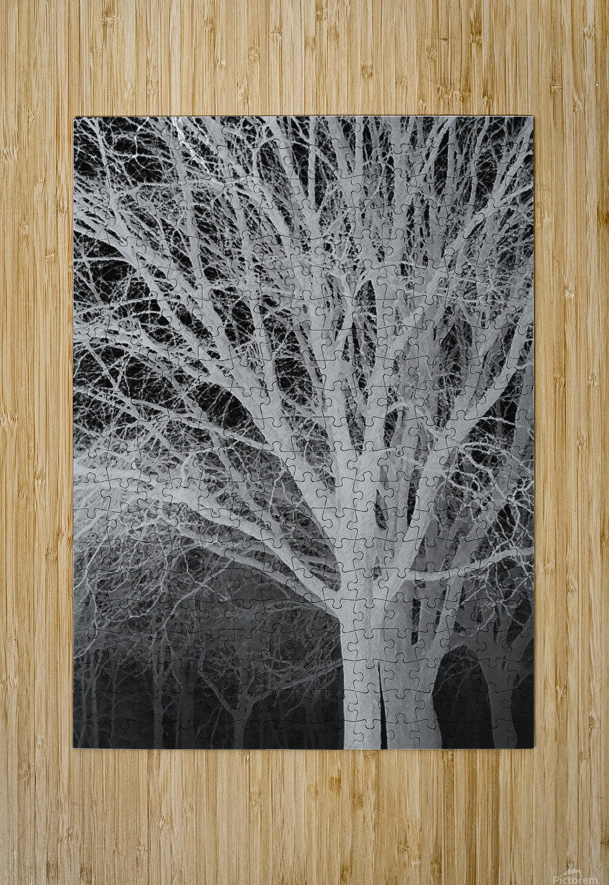 Ghost Trees  HD Metal print with Floating Frame on Back
