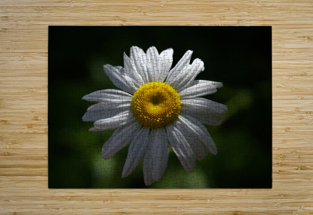 marguerite  HD Metal print with Floating Frame on Back