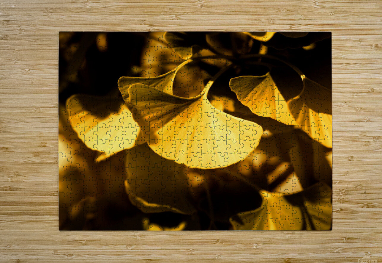 Ginkgo  HD Metal print with Floating Frame on Back