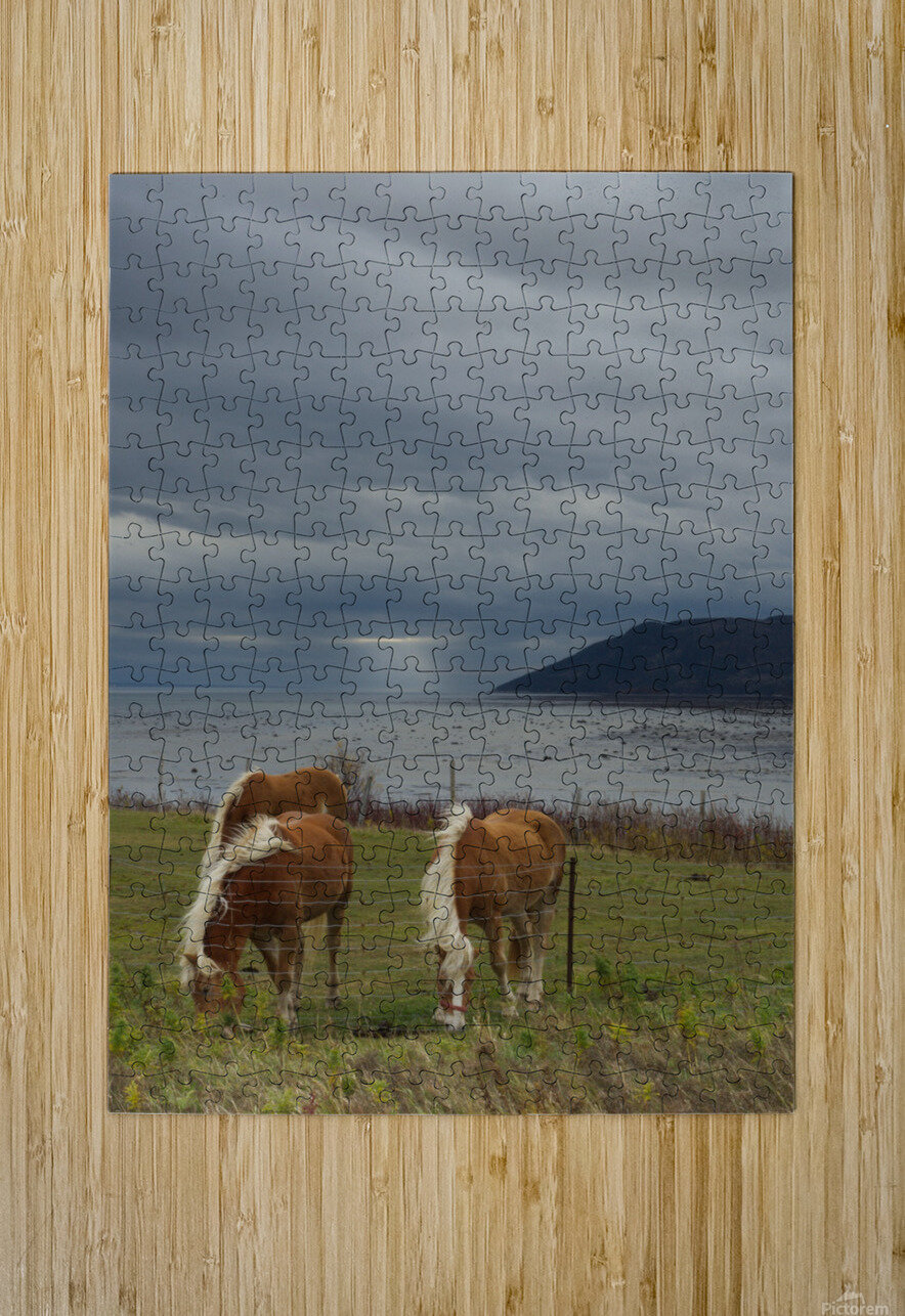 Chevaux  HD Metal print with Floating Frame on Back