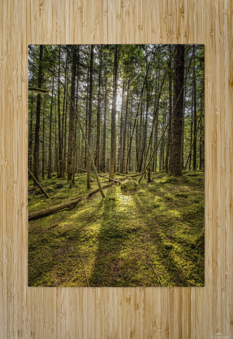 Mossy Forest Morning  HD Metal print with Floating Frame on Back