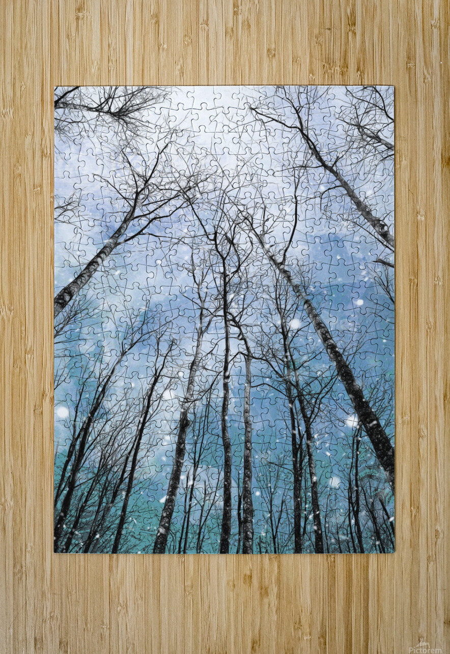 Winter Trees   HD Metal print with Floating Frame on Back