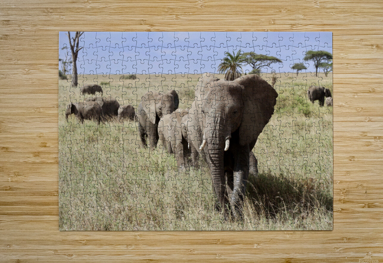 Follow the Leader  HD Metal print with Floating Frame on Back