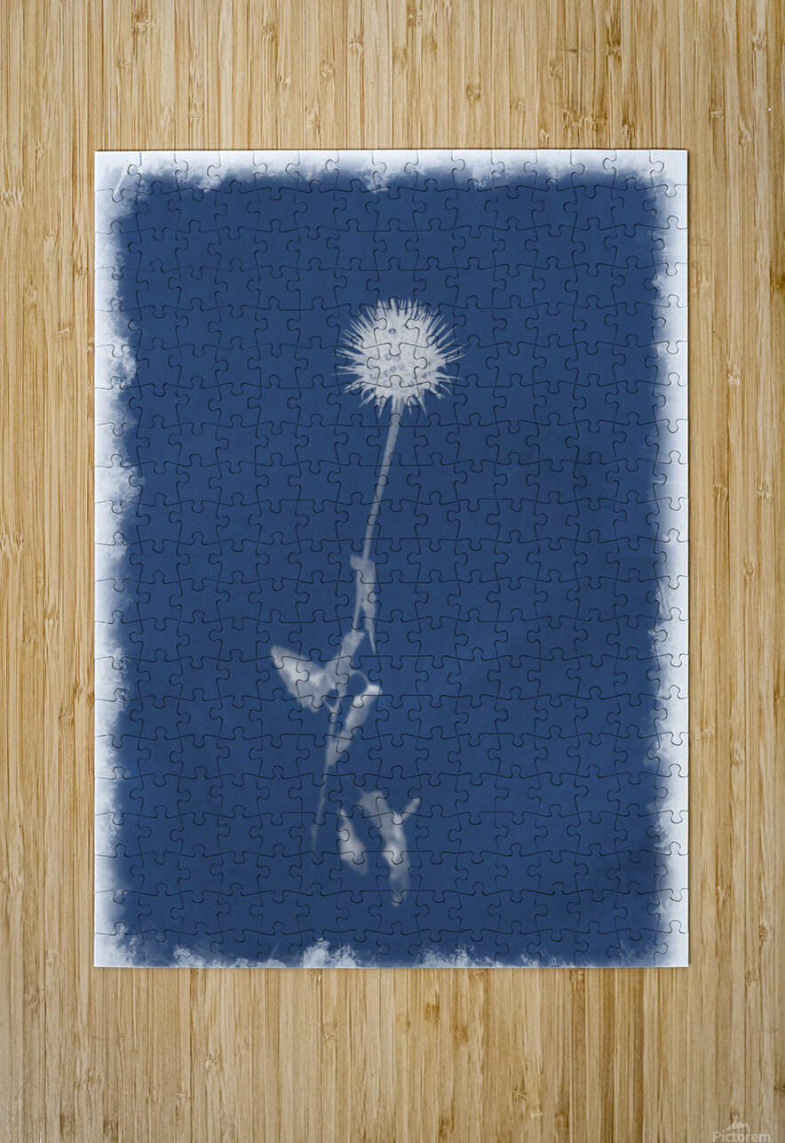 Cyanotype 101  HD Metal print with Floating Frame on Back