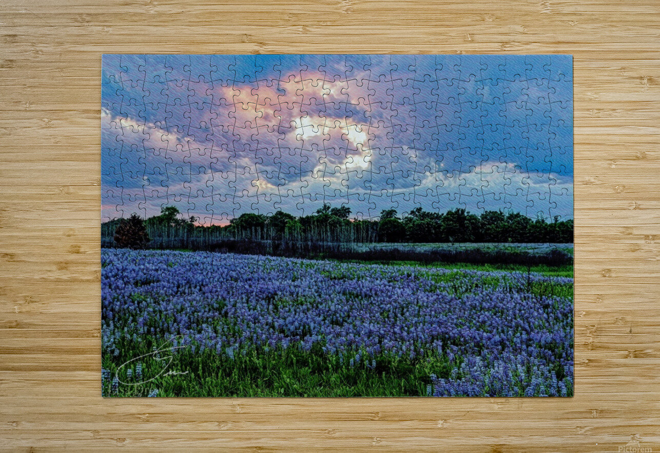 lupine sunset   HD Metal print with Floating Frame on Back