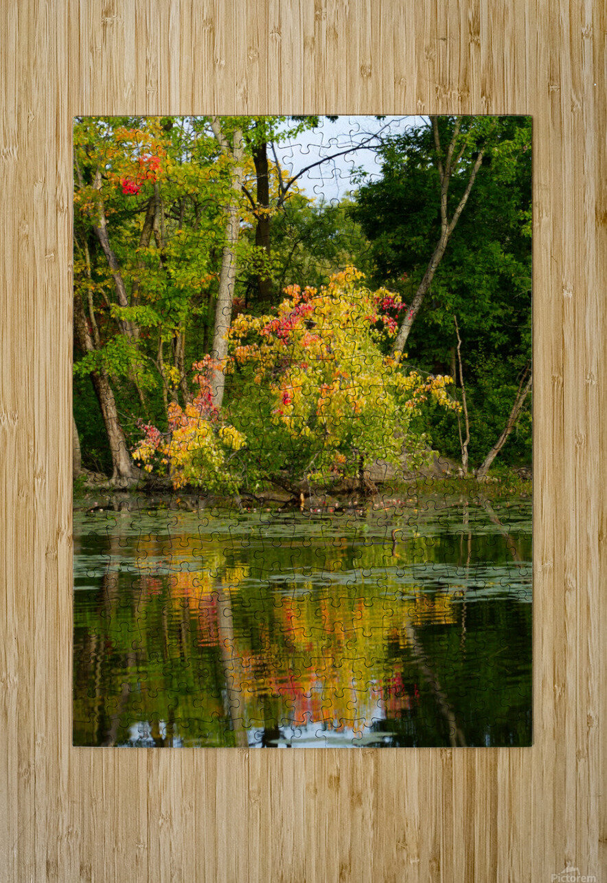 Automne  HD Metal print with Floating Frame on Back