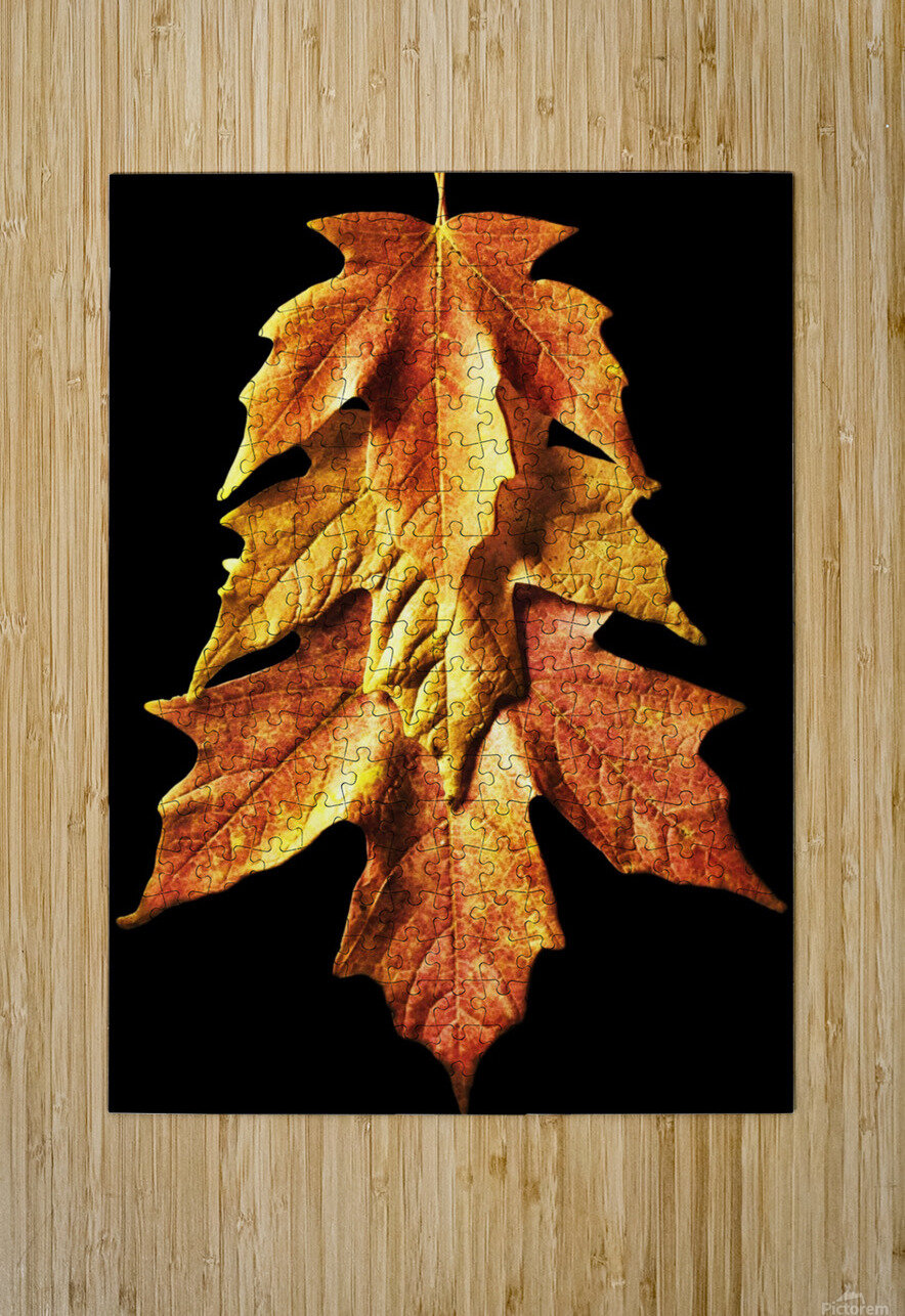 Fall Maple Leaves 1  HD Metal print with Floating Frame on Back