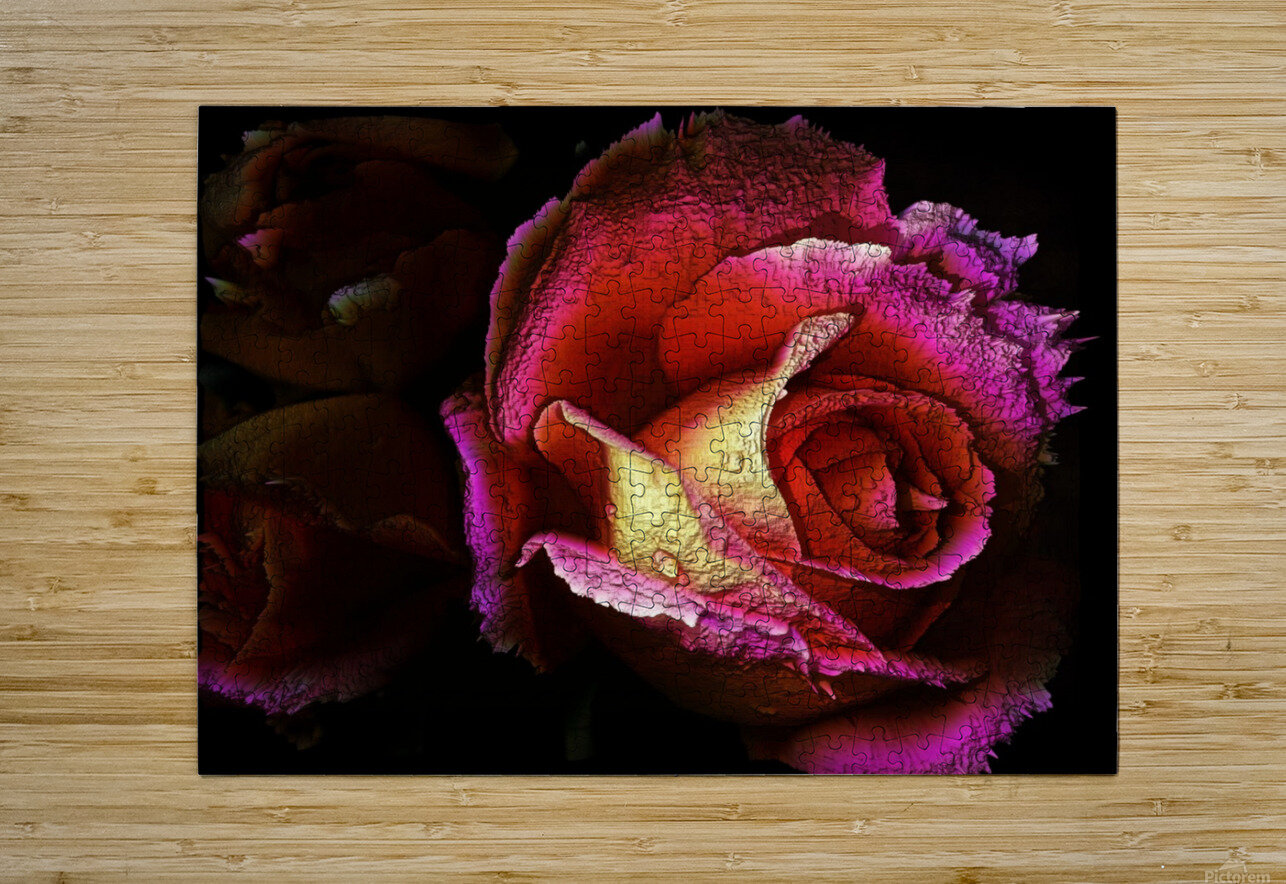 Textured Rose  HD Metal print with Floating Frame on Back
