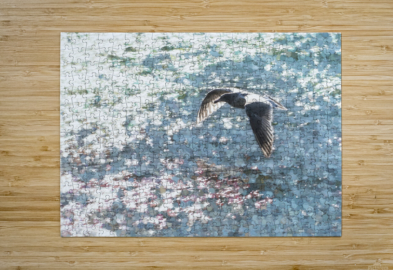 Sparkling Gull   HD Metal print with Floating Frame on Back
