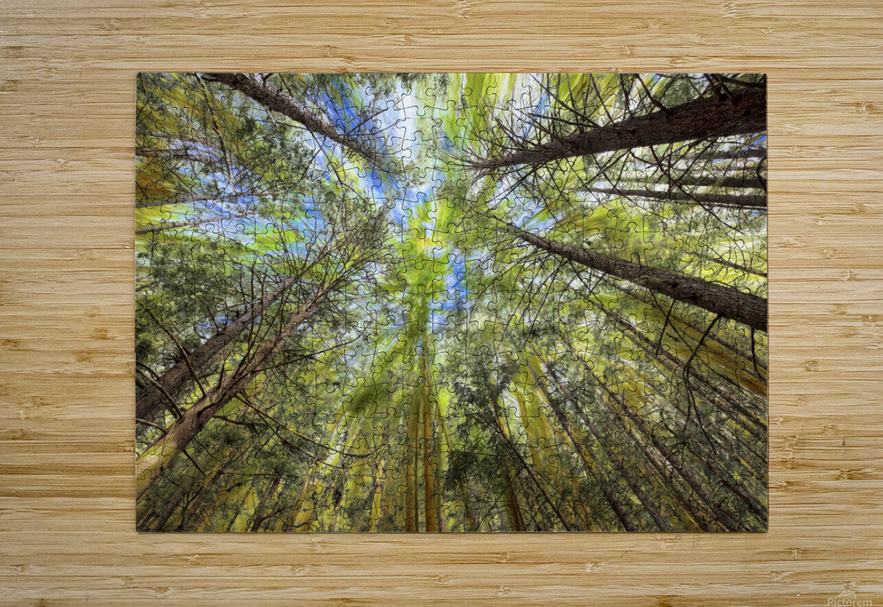 Forest Particles  HD Metal print with Floating Frame on Back