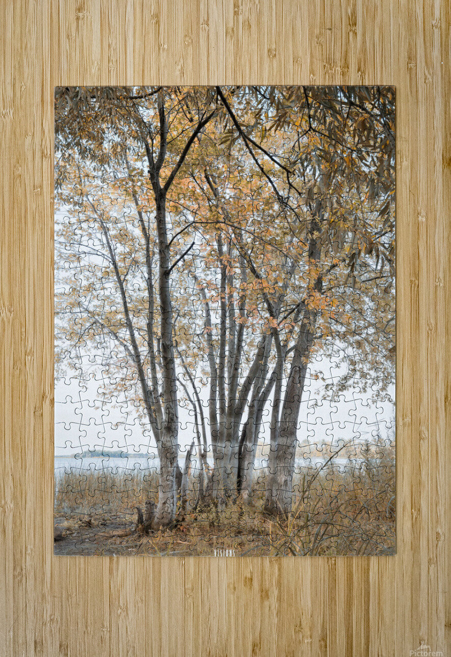 Lumiere automnale 2  HD Metal print with Floating Frame on Back