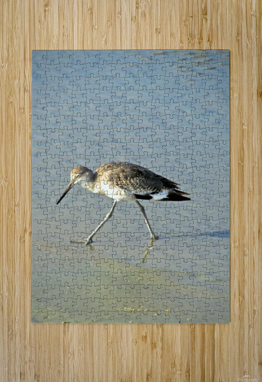 Ba Bum Bird  HD Metal print with Floating Frame on Back