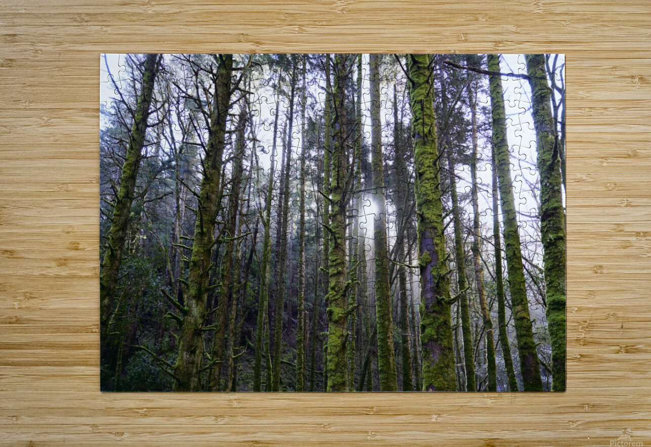 Trees of the Killarney National Park Co. kerry Ireland Europe 2018  HD Metal print with Floating Frame on Back