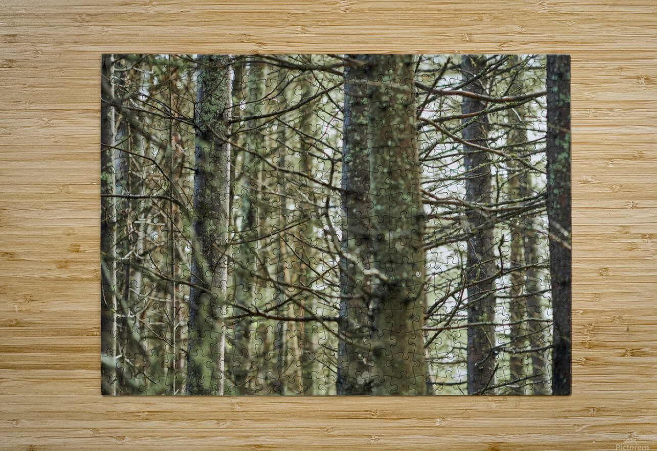 Trees in forest Mauricie National Park Quebec Canada  HD Metal print with Floating Frame on Back