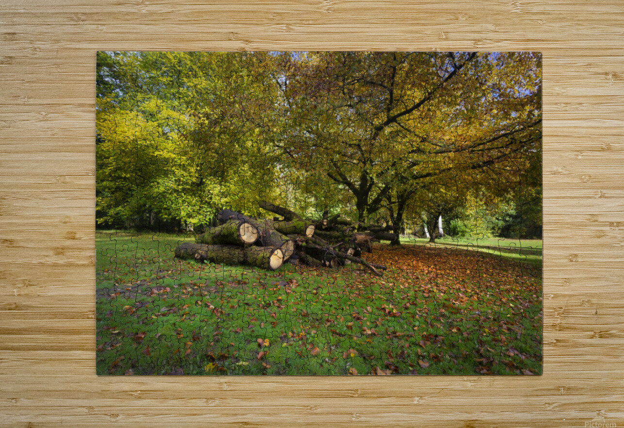 Autumn leaves and cut trees  HD Metal print with Floating Frame on Back