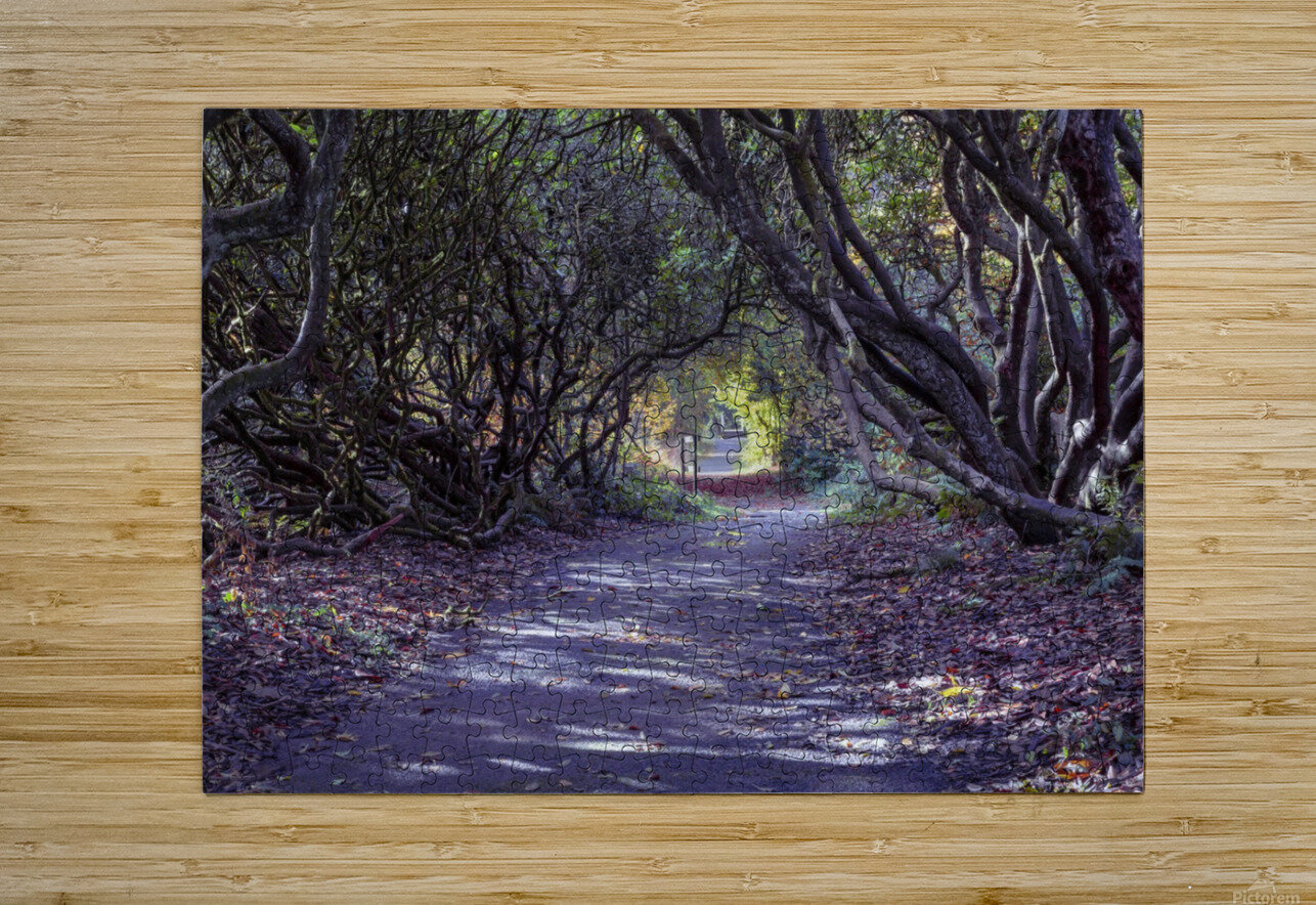 Tree lined Rhododendron walkway  HD Metal print with Floating Frame on Back