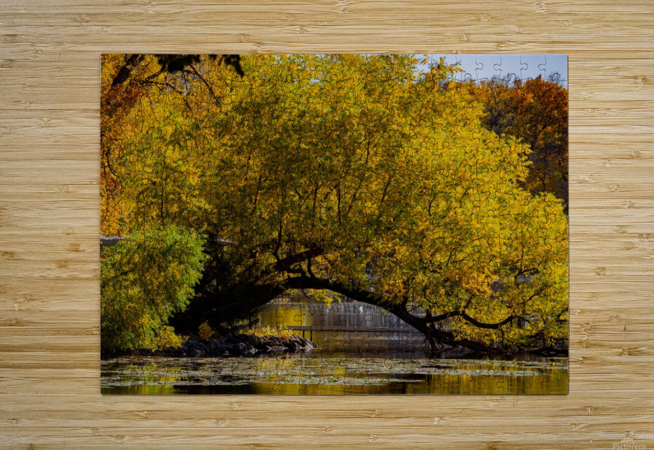 Arc de Treeomph  HD Metal print with Floating Frame on Back
