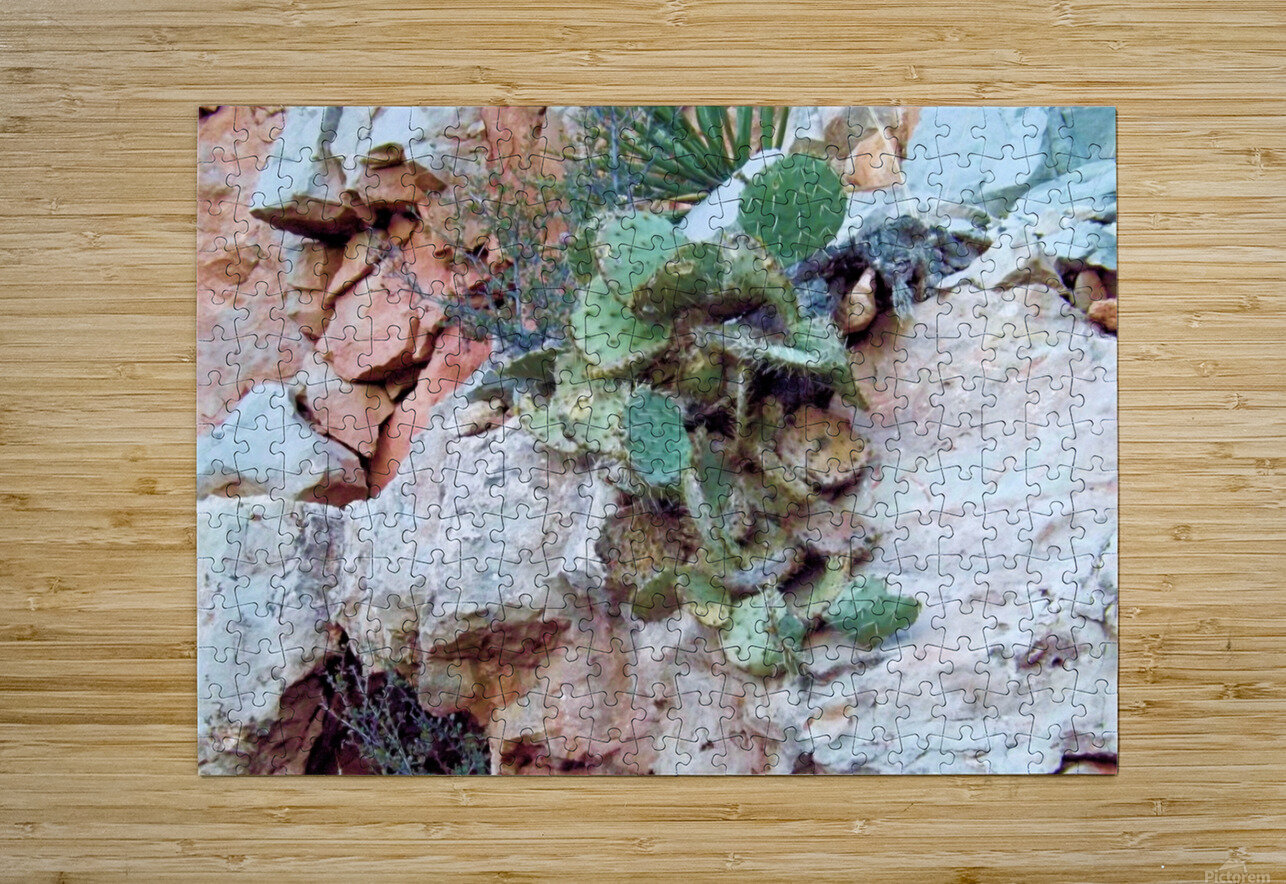 Cactus  Impression métal HD avec cadre flottant sur le dos