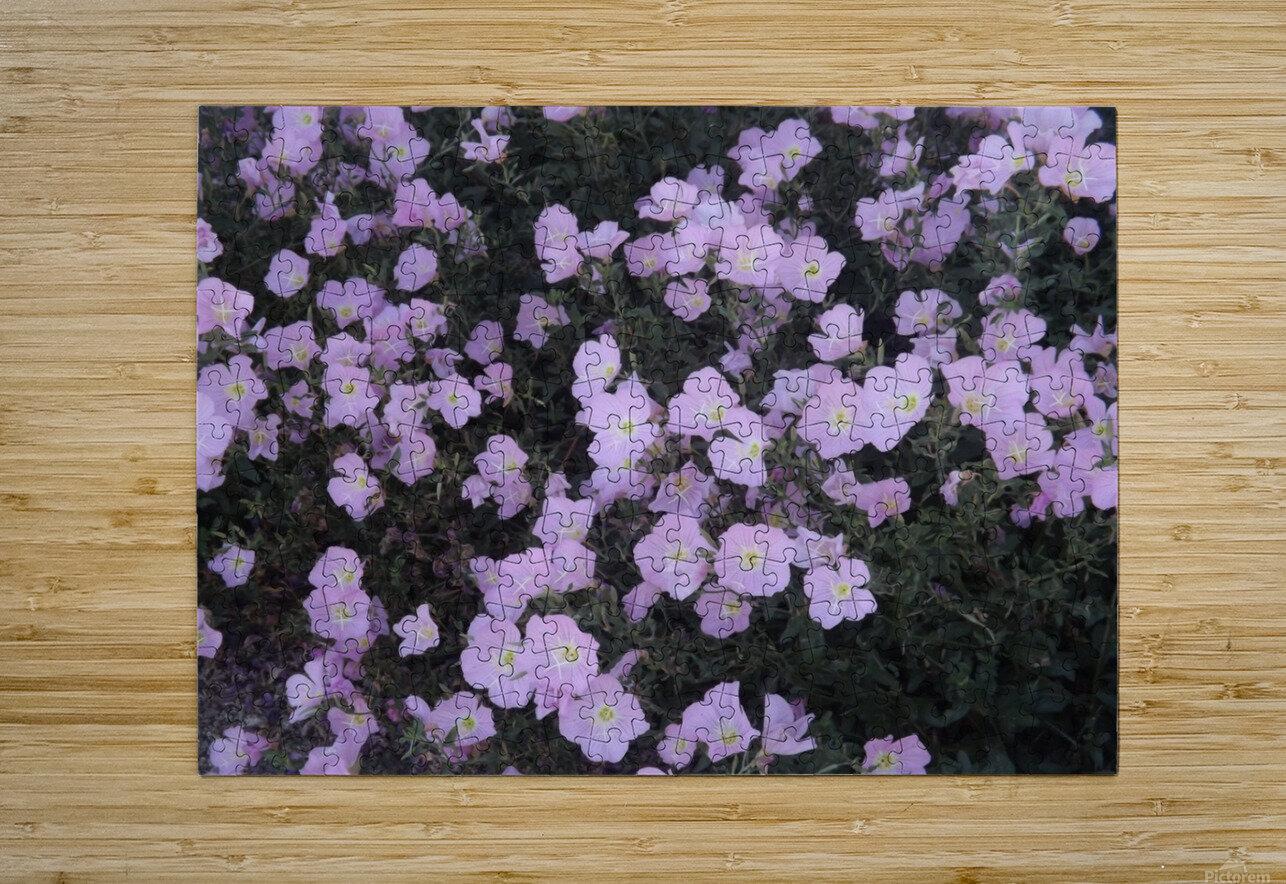 Flower Garden  HD Metal print with Floating Frame on Back