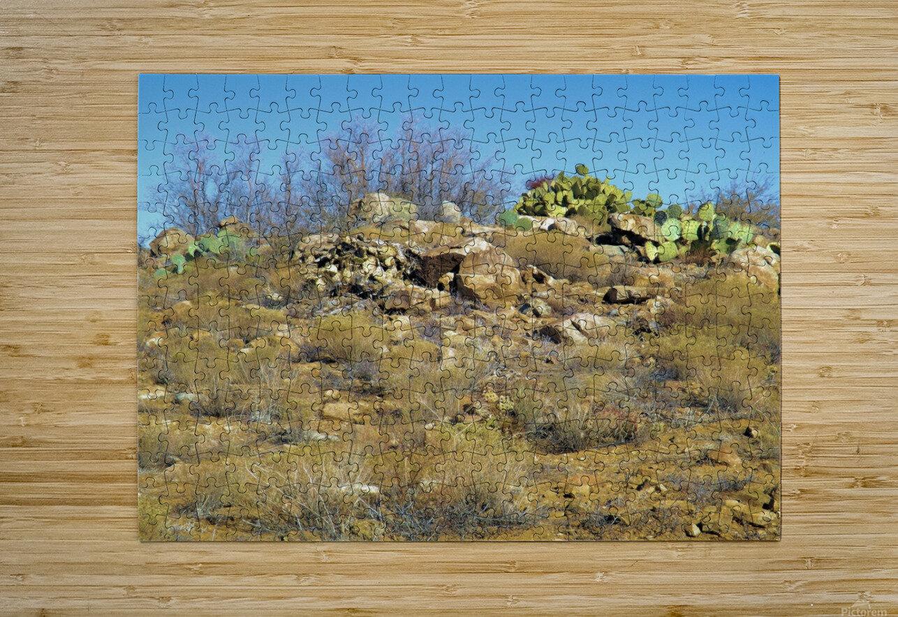Rock n Cactus  HD Metal print with Floating Frame on Back