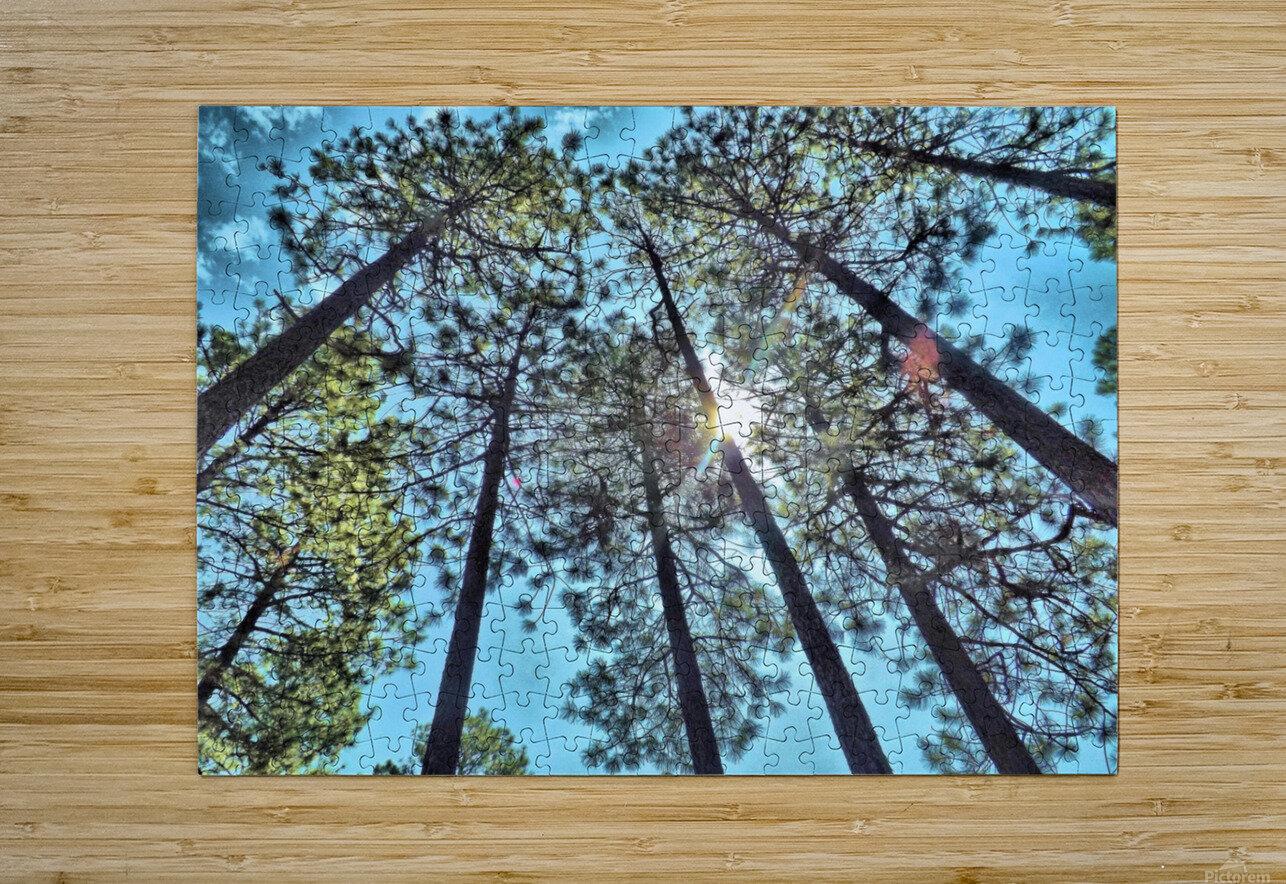 Tree Tops  Impression métal HD avec cadre flottant sur le dos