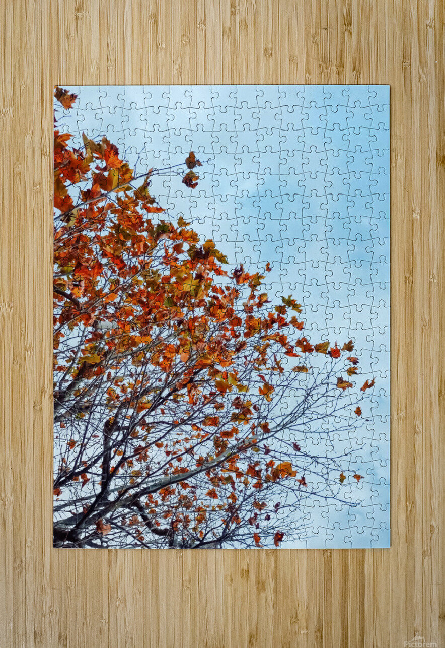 Tree branch with orange autumn leaves and blue cloudy sky  HD Metal print with Floating Frame on Back