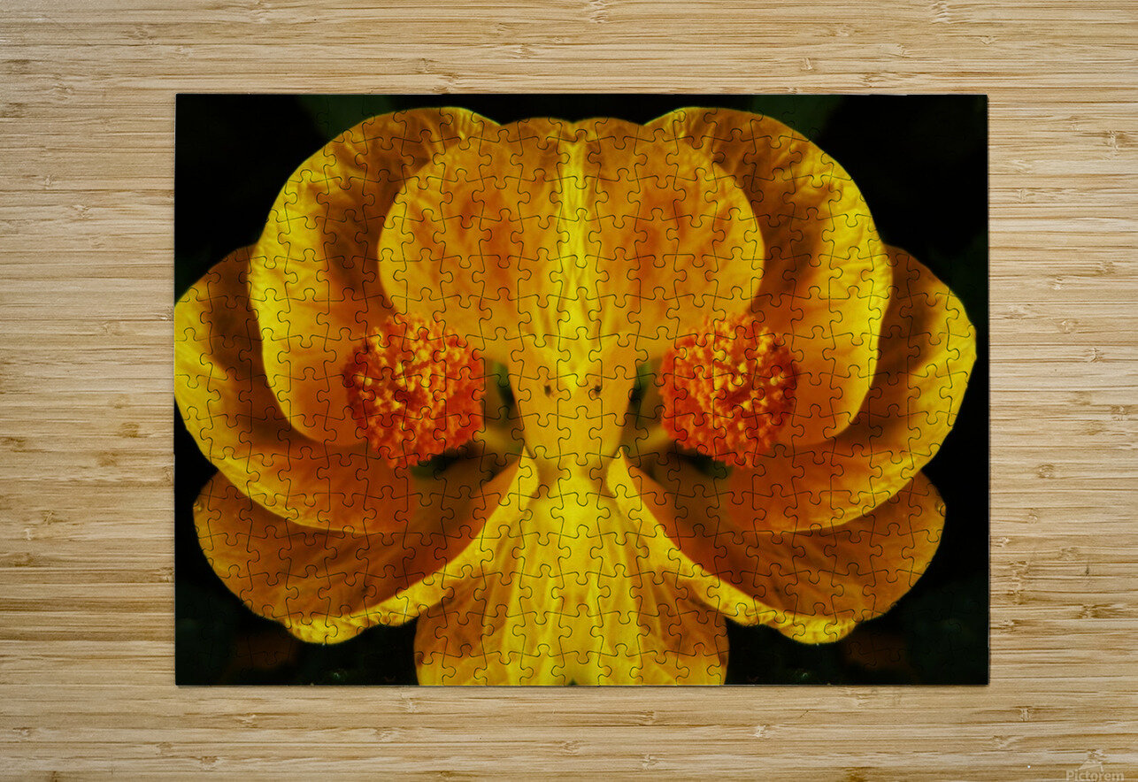 flower91  HD Metal print with Floating Frame on Back