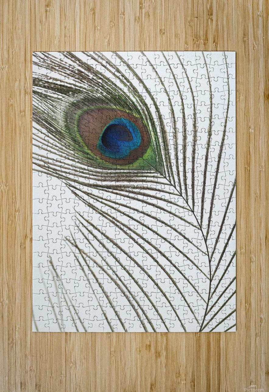 Peacock feather  Impression métal HD avec cadre flottant sur le dos