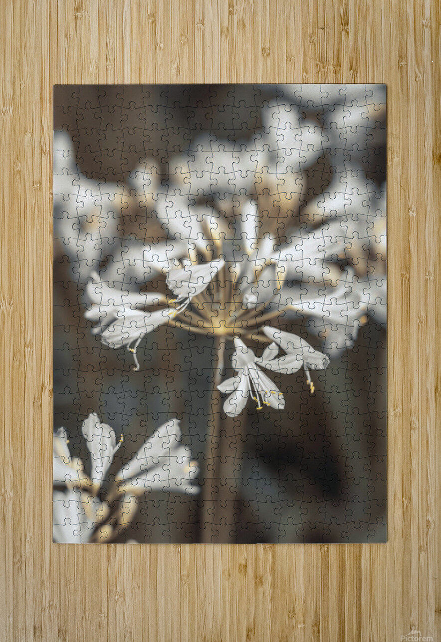 African Lilies  HD Metal print with Floating Frame on Back