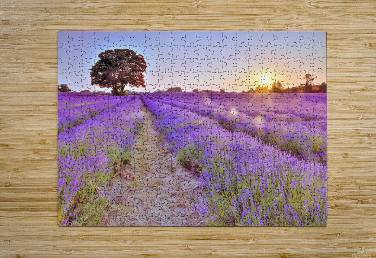 Lavender field at sunset  HD Metal print with Floating Frame on Back