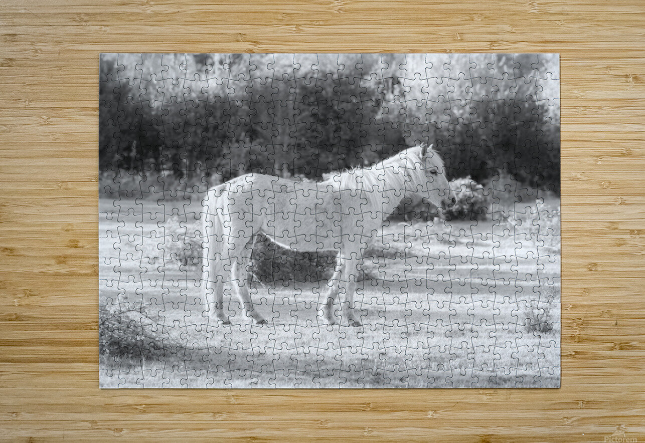 Horses at the New Forest, UK  HD Metal print with Floating Frame on Back